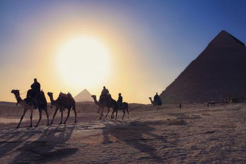 Camels Simon Matzinger.jpg